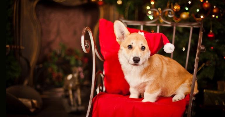 Christmas Sale On Pet Supplies