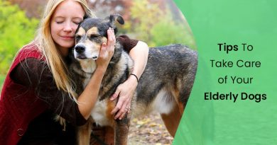Tips-To-Take-Care-eldery-dog