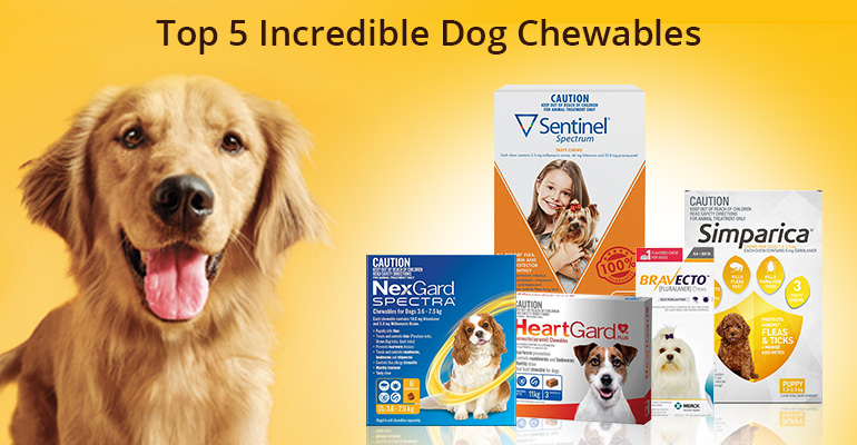 Favorite Dog Chews