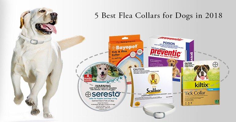 best-flea-tick-collar