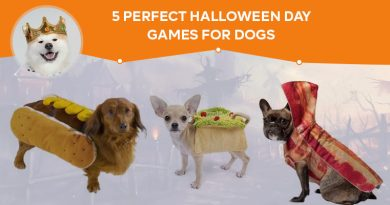 Perfect Halloween Day Games for Dogs