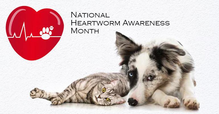 national heartworm awareness month