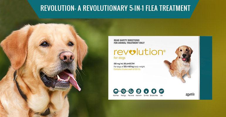 Revolution 5-in-1 Flea Treatment