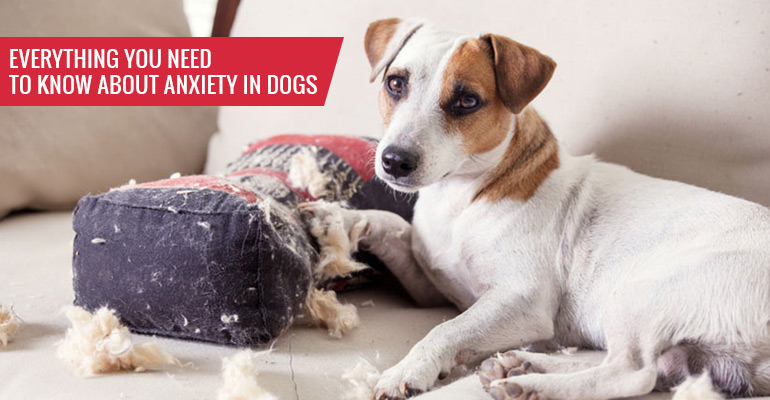 Everything You Need to Know About Anxiety in Dogs