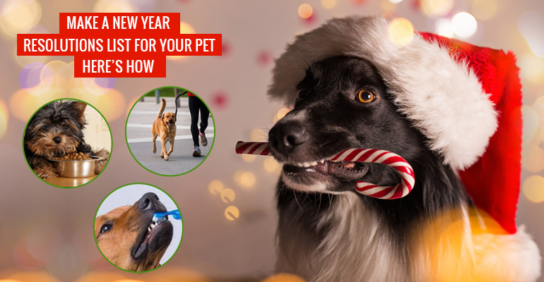 New Year Resolutions for Pets