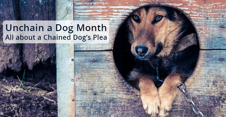 Unchain a Dog Month