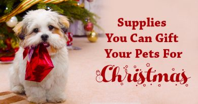 Gift Your Pets For Christmas