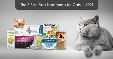Flea Preventions for Cats in 2021