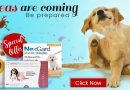The 8 Most Effective Flea and Tick Treatments for Dogs