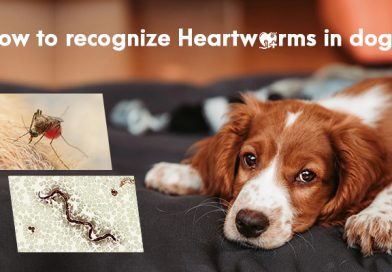 How to Recognize Heartworms in Dogs?